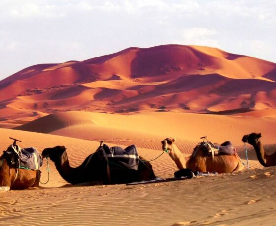 Private Marrakech to Fes desert tour