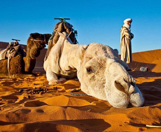 marrakech to fez